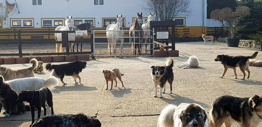 Multikulti Hundemeute